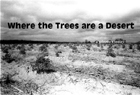Where the Trees are a Desert - 2003