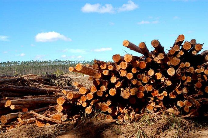 logs view_web